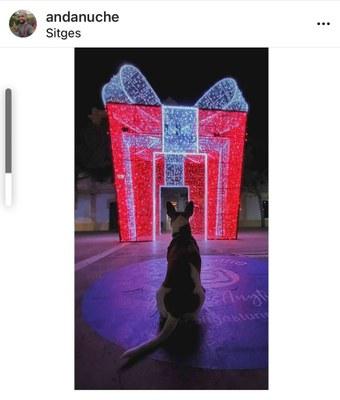"""El concurs d'Instagram """"El regal del Nadal"""" ja té guanyadors"""