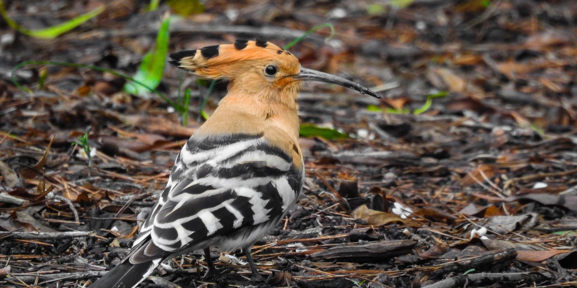 Els ocells de Sitges