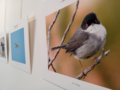 Exposició -Els ocells de Sitges .jpeg