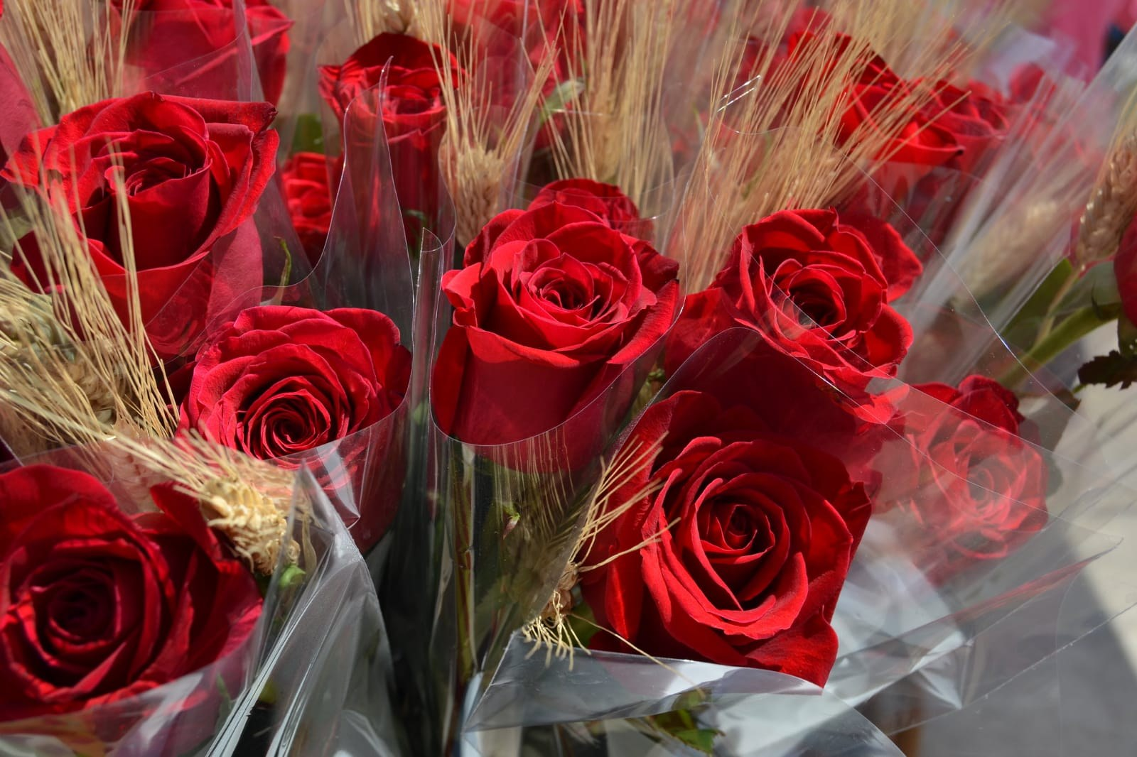 L'Ajuntament de Sitges promou una campanya per regalar roses i llibres aquest Sant Jordi 2020 atípic des del confinament