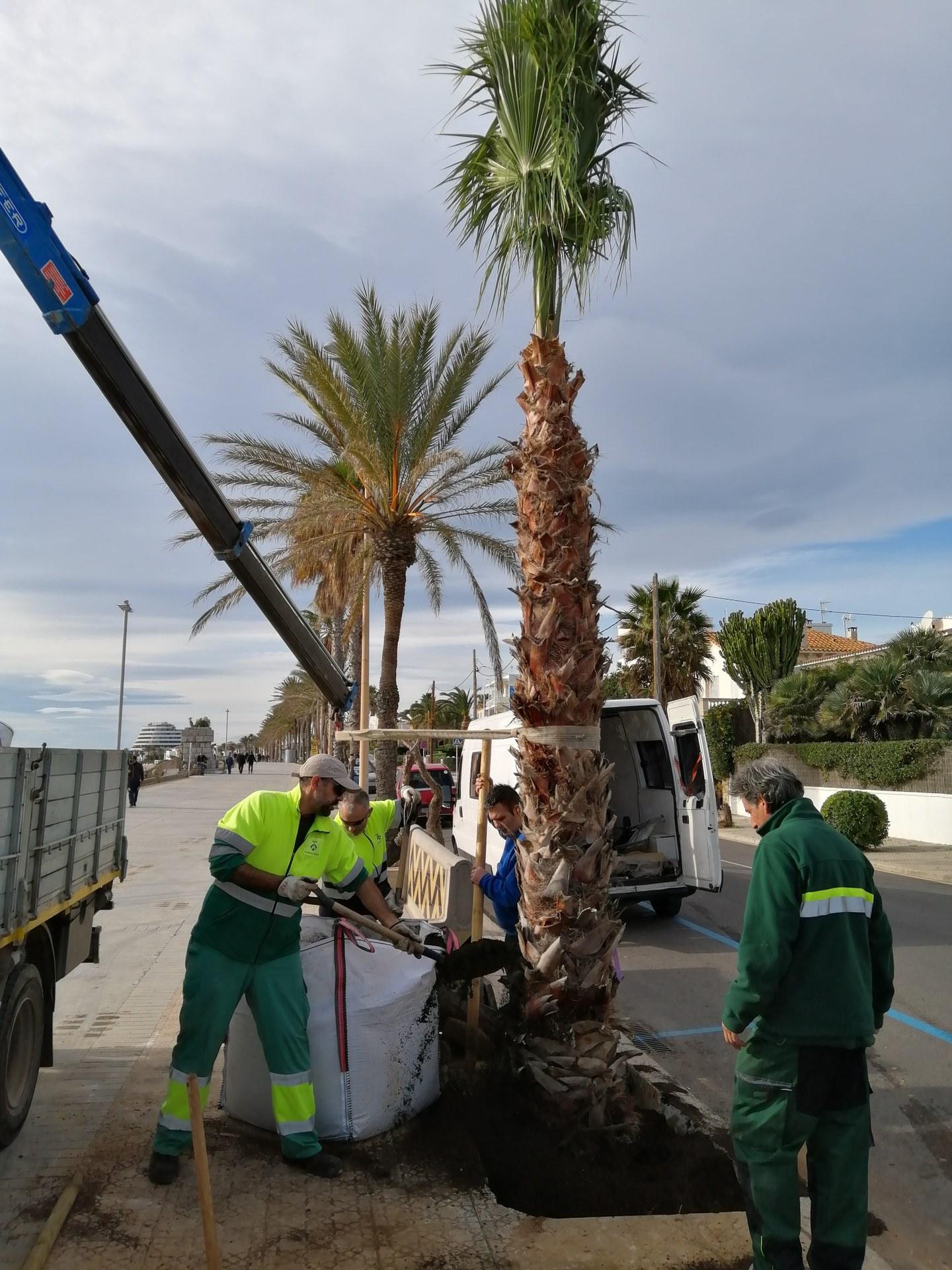 L'Ajuntament plantarà  un total de 43 arbres nous