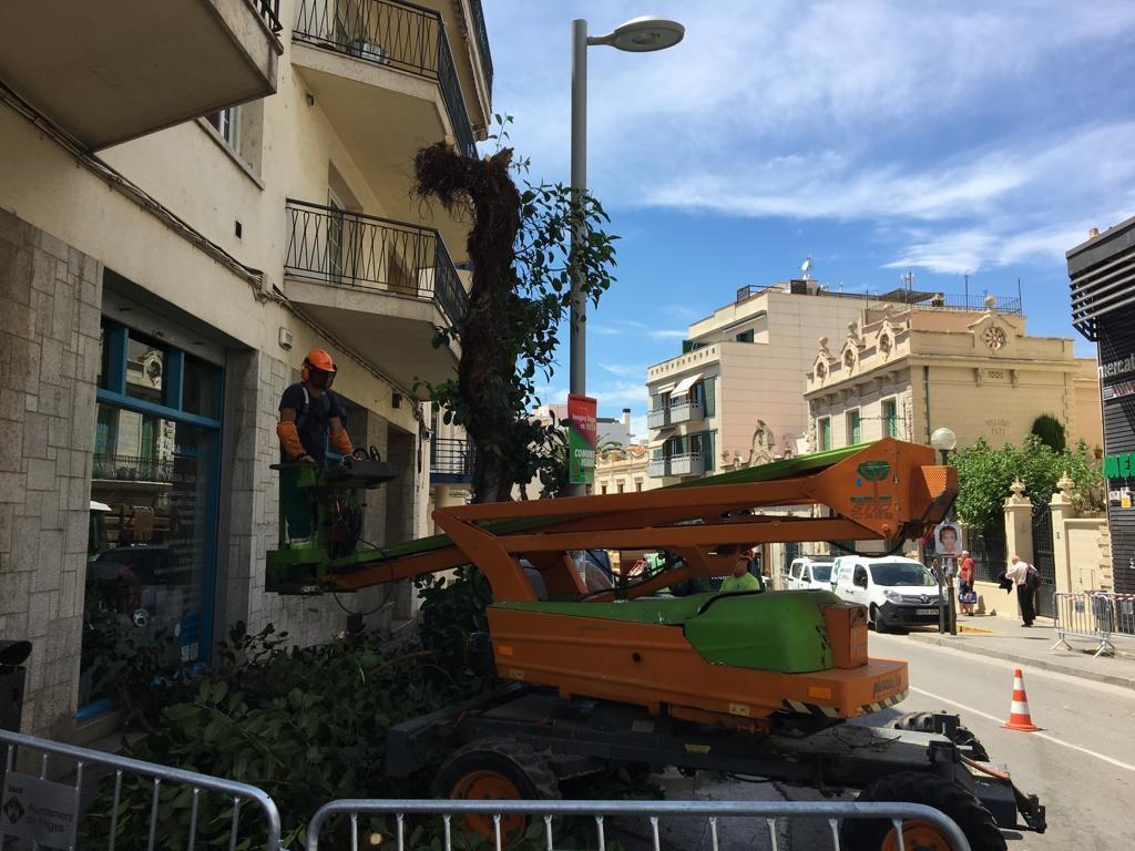 L'Ajuntament desenvolupa una actuació de d'arbrat al carrer Artur Carbonell i Hort Gran per motius de seguretat i d'il·luminació