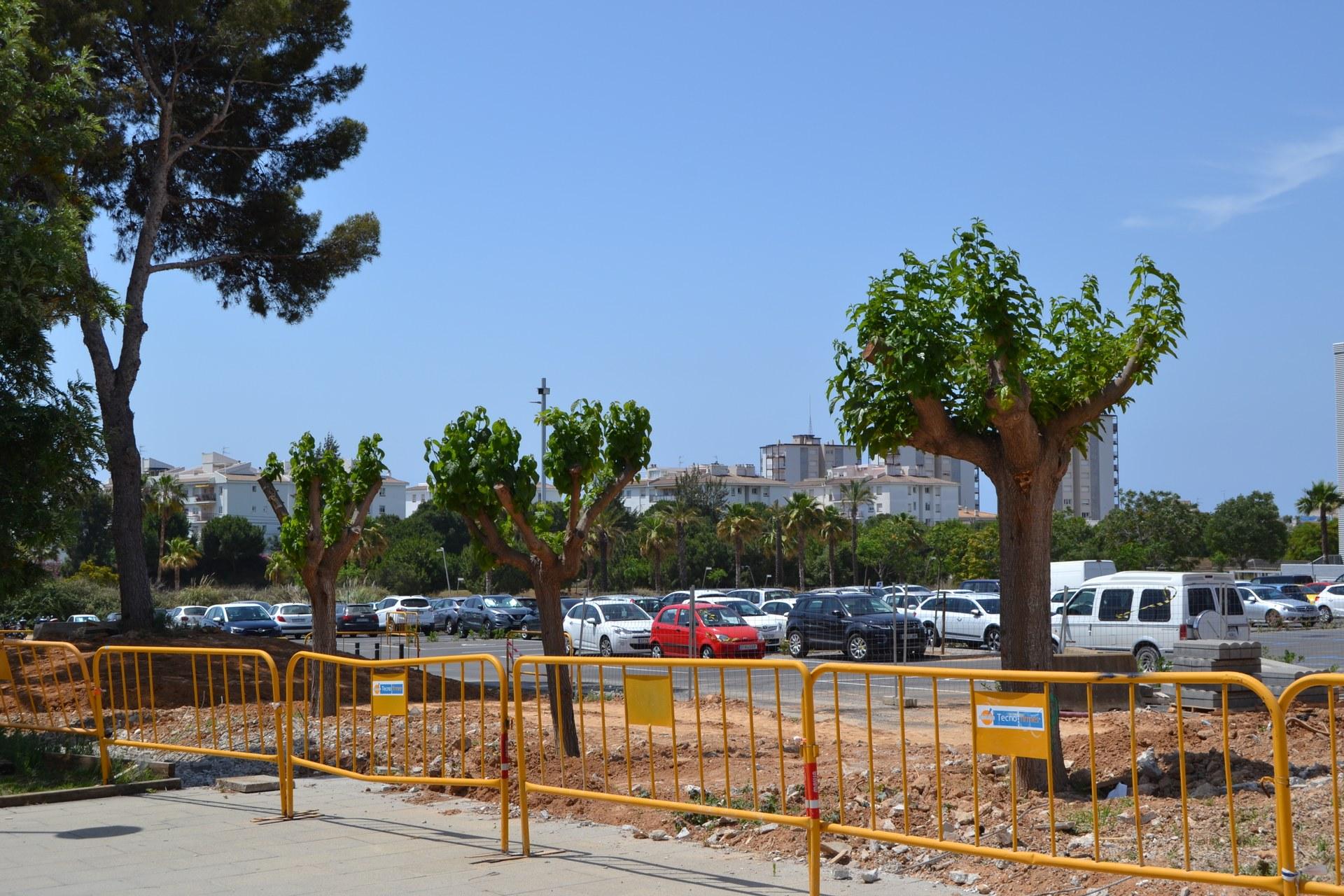 L'ajuntament transplanta els arbres procedents del terreny on es construeix la futura Escola Agnès de Sitges